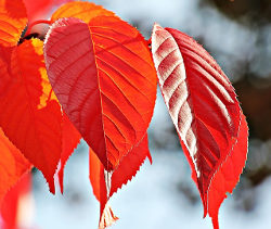 SEO i na podzim
